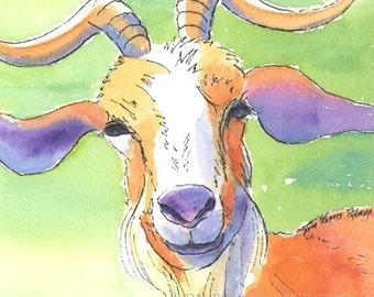 Goat Portrait 5x7 print