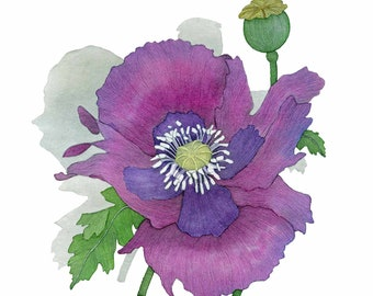 Purple Poppy, Botanical, Watercolor Flower Prints, Floral Prints, Watercolor Decor, Digital Download, Printable Decor, Wall Art, Poppies