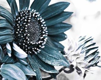 farmhouse photography blue sunflower