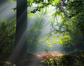 Forest Sunlight by Christopher Mills - A4 or A3 Fine Art Giclee Canvas Print | Nature Photography - Landscapes/Forests/Trees