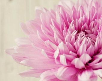 flower photography, pink home decor, still life art, nursery decor, close up photograph, chrysanthemums, pink mums, pink flower print