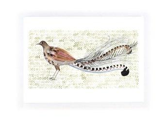 Lyre Bird - archival art print