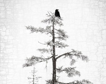 Raven Peace, A Single Raven in the Top of a Tree Signed Fine Art Photograph by June Hunter, Raven Home Decor