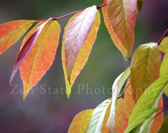 Autumn Leaves Afire Nature Print Leaf Photography. Autumn Fine Art Print Wall Decor Unframed Photo Print, Framed Photography, Canvas Print