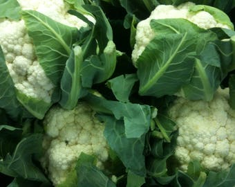 Cauliflower (Snowflake/ball Variety) - Approx 100 Seeds - TheGreenGroup Eco-Products - Great Price - Non GMO - Vegan Allotment Garden Nature