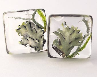 Earrings made of forest moss in a transparent resin on the pin 925 sterling silver