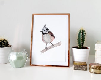 The Crested Tit postcard, watercolor illustration