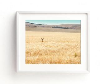 "deer in field, landscape, wall art, art prints, large art, large wall art, modern, contemporary, nature, fine art - ""Hiding in the Barley"""