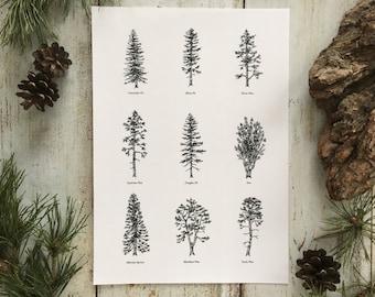 Evergreen Trees I - Print A4