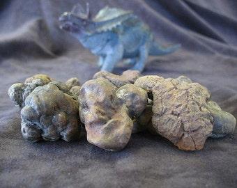 Coprolite specimen, Dinosaur dung, Dinosaur poop, fossilized dung, fossilized poop