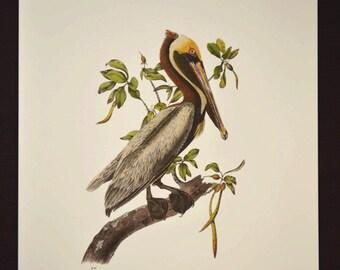 Nautical Wall Art Sea Bird Wall Decor Print Ocean Pelican
