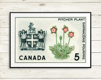 P150 Newfoundland, Newfoundland Canada, Nfld, NL Canada, Pitcher Plant, wildflowers, wildflower art, wildflower posters, Nfld posters