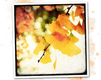 Colors of Ginkgo - Nature - photo art signed 20x20cm