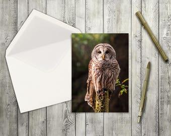 Barred Owl blank greeting card