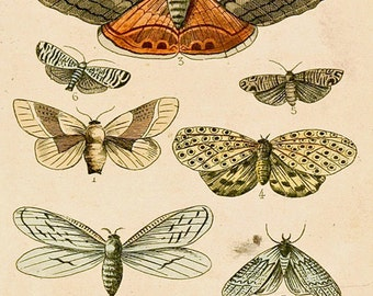 """Antique Natural History Print """"The Study of Moths"""" Woodland Forest Butterfly Moth French Vintage"""