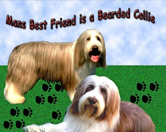 Mans Best Friend is a Bearded Collie  Fridge Magnet 7cm by 4.5cm
