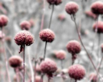 Botanical Photograph Pink Gray Flower Dreamy Garden Nature Floral Minimalist