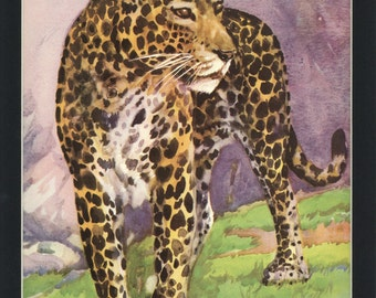 Beautiful 1933 Vintage Africian Leopard Wild Animal Print