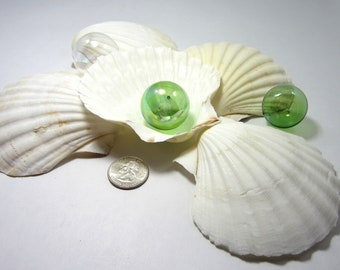 Sea Shells for Beach Decor -  Nautical Baking Scallop Shells for Display, Baking or Crafts - 3pc