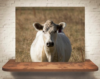 Cow Photograph - Fine Art Print - Color Photography - Wall Art - Home Decor - Wall Decor -  Farm Pictures - Farmhouse Decor - Cows