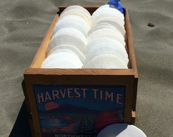 50 Large 3.5-4 inch Natural White Sand Dollars