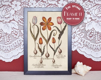 "Vintage illustration of Tulips - framed fine art print, flower art, home decor 8""x10"" ; 11""x14"", FREE SHIPPING - 97"