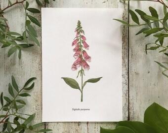Foxglove - Print A5
