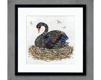 Black Swan in Nest Art Print