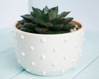 White Ceramic Planter - White Succulent Planter - Modern Succulent Pot - Air Plant Holder - Plant Holder - Cactus Planter - Plant pot