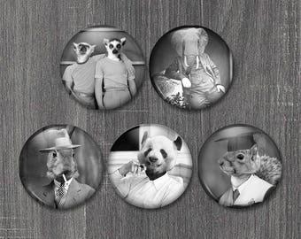 Animal Magnets, Lemur Decor, Bunny Rabbit Magnet, Kitchy Gifts, Whimsical Gift Idea, Stocking Stuffer for Guys, Funny Fridge Magnets