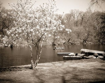 New York Central Park - Romantic at NYCP - Spring in Central Park Boating Lake - Magnolia Flowering Tree - Landscape - Nature Photograph