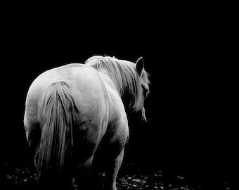 White horse photo, black and white horse photo, fine art photo, horse print, horse art, equestrian decor