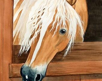 HAFLINGER horse art SO LOVELY in stall long mane