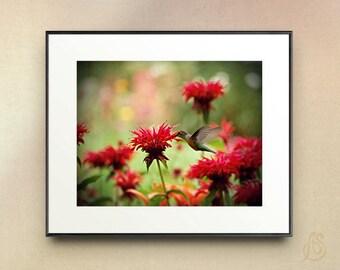 Hummingbird art print - hummingbird photograph art print - red flower photography - red floral art print