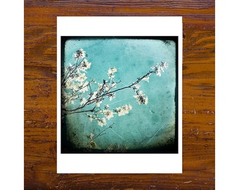 8x8 Print [JCP-194] - White Blossom 2