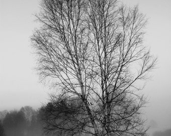 Black and White Birch Winter Scene in Upstate New York 10x13 Print