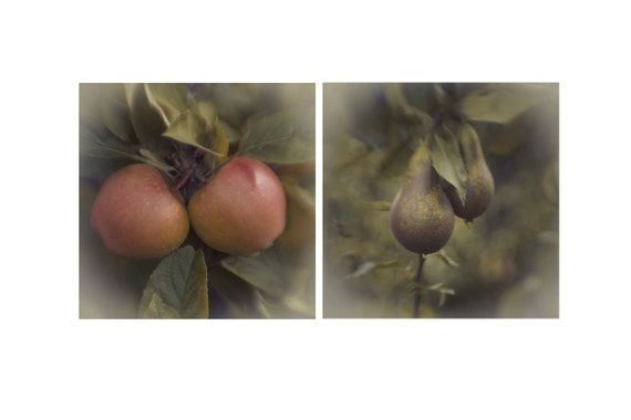 Kitchen Photography, Shabby Chic, Apple Pear Photos, Set of two 5x5, Wall Decor, Kitchen Decoration, Soft Focus Fruit Green Brown Yellow Red