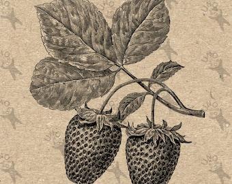 Vintage image Strawberries Instant Download Digital printable picture retro clipart graphic - transfers, prints,burlap,iron on etc HQ 300dpi