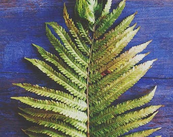 Fern Photograph - Indigo Blue Art - Nature Photograph - Botanical Wall Art - Minimalist - Modern Rustic Decor - Green - Bedroom - Farmhouse