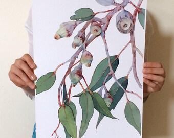 Eucalyptus print A3; Australian native plant botanical illustration; nature art poster; decor; tree branch horizontal wall art print