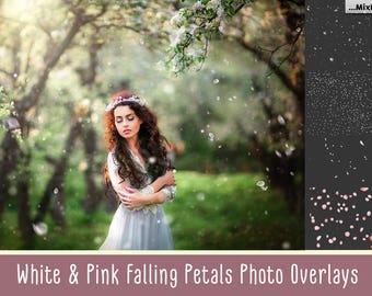 Falling White & Pink Petals Photo Overlays , Sakura Petals, Cherry Petals, Apple blossom petals overlays, PNG Petals, Transparent background