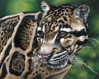 Clouded Leopard-Print