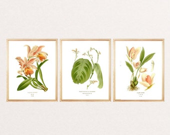 Orchidee botanical flowers print botanical art botanical illustration vintage SET OF 3 wall art print home office decor pink light peach