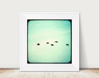 """KunstDruck """"Bretonischer Frühling"""" - Fotografie Foto Kormorane Vogel Meer Strand Reise Bretagne Frankreich Silhouette Himmel"""