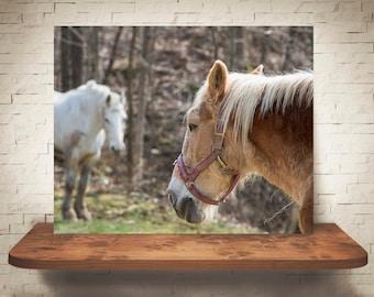 Horse Photograph - Fine Art Print - Color Photography - Equine Wall Art - Wall Decor -  Horse Pictures - Farmhouse Decor - Horses