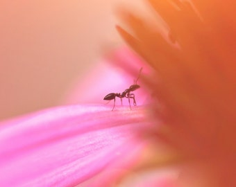 Nature Photography - A Sunny Day in the Coneflower - fine art print - 11 x 14 - flower ant pink fuschia orange peach colorful home decor