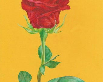 Print of a Rose Drawing