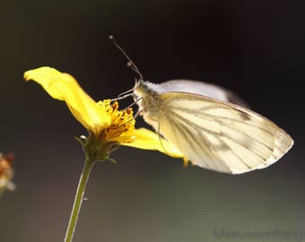 Butterfly on a yellow plant