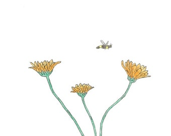 Calendula and Little Fly