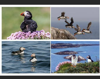 Set of 4 Greetings Cards - Puffin Design Blank Inside Bird Photo Card - Photography